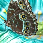 Recycled cars, the butterfly effect and a Biden boost for biodiversity