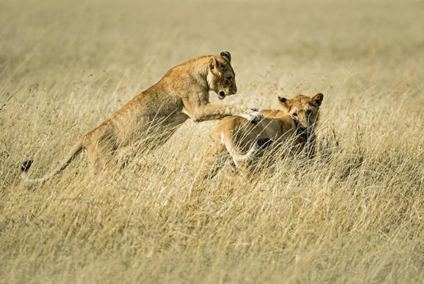 肯亞 肯亞國家公園