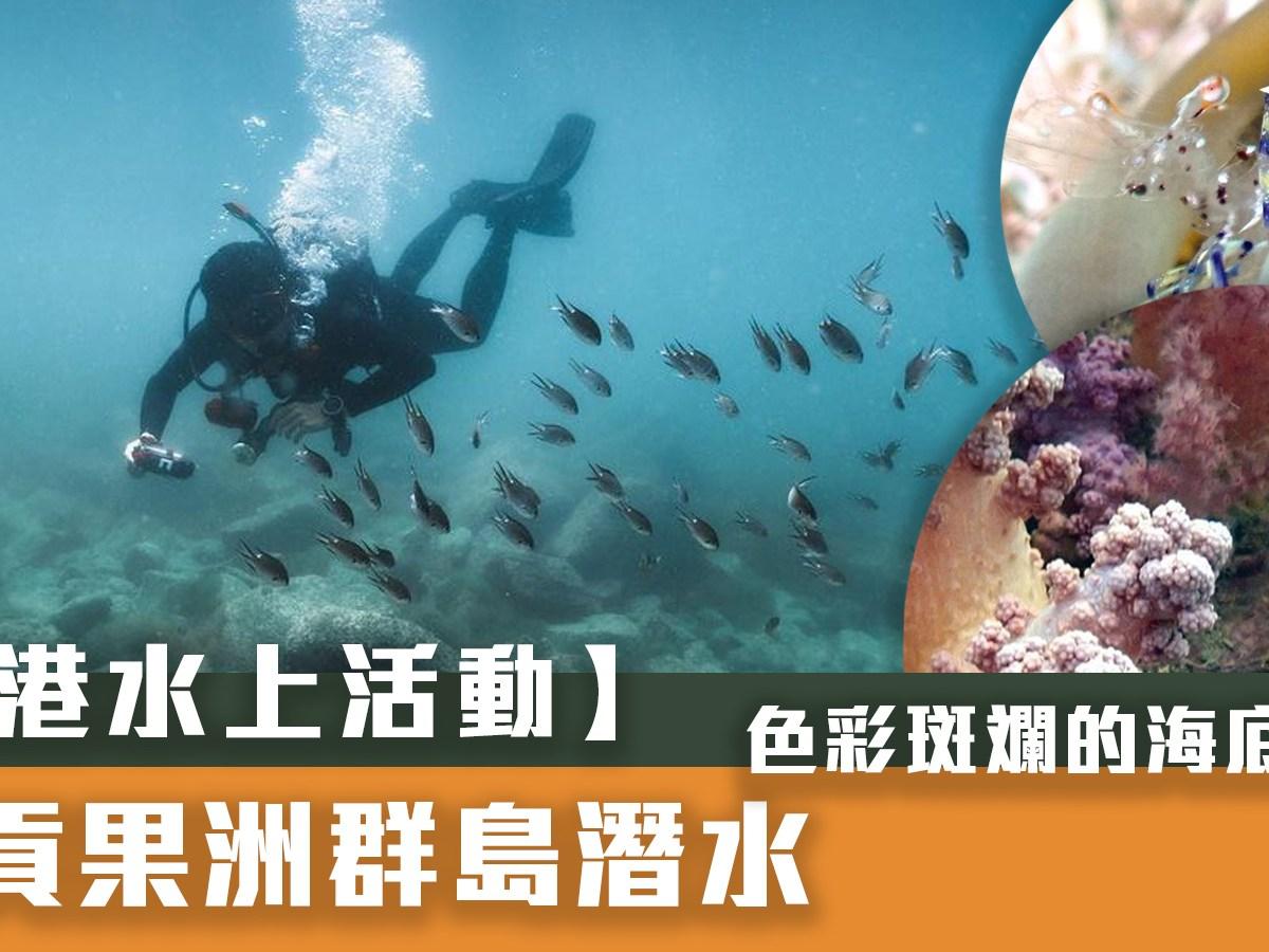【香港水上活動】西貢果洲群島潛水-色彩斑斕的海底花園