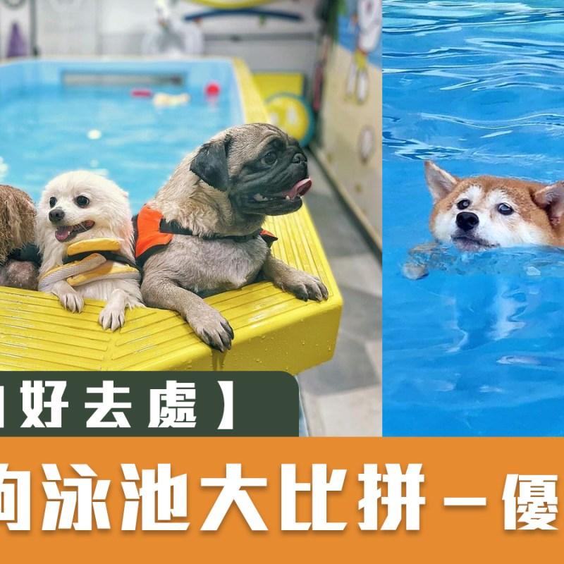夏天好去處 放狗好去處狗狗打卡 狗狗好去處 狗狗泳池