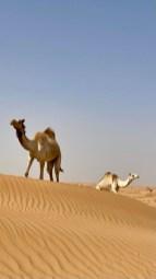 Suwaidan Desert