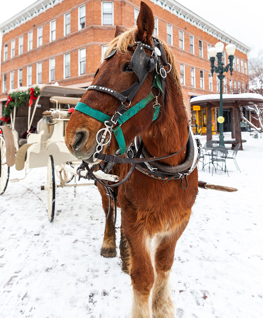 A magical horse and carriage ride through Aspen with Glitter and Bubbles.