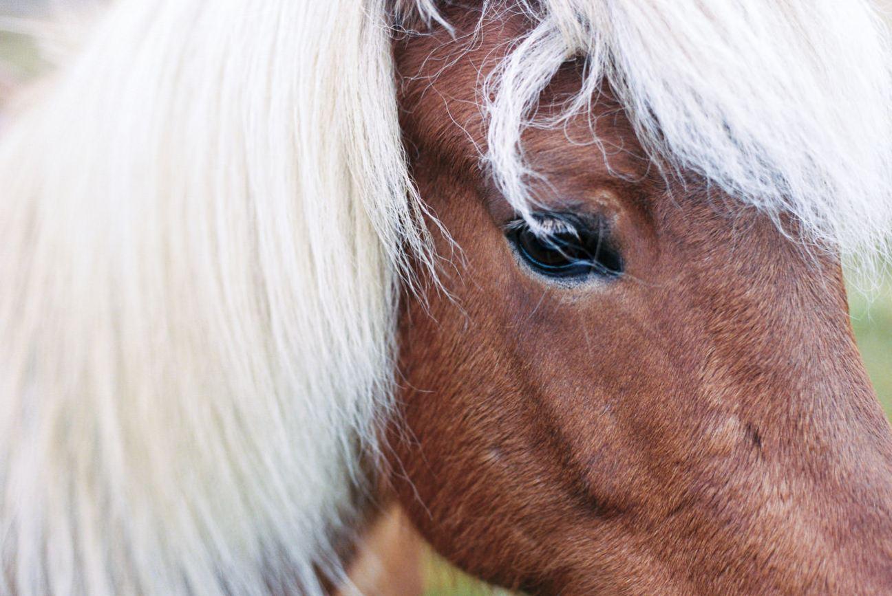 Pretty horse face.