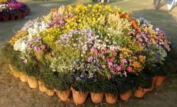 glittercodes_noida-flower-show_14