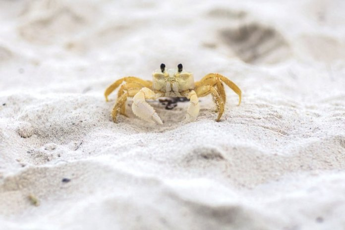 st thomas destination wedding crab jw