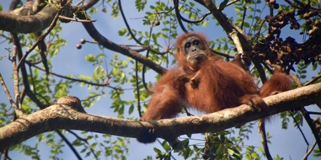 13 Things to Know Before You Go to Bukit Lawang, Indonesia