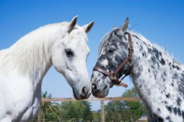 Doterra oils for horses