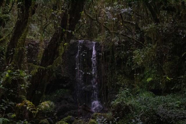 Hiking Kilimanjaro Marangu route