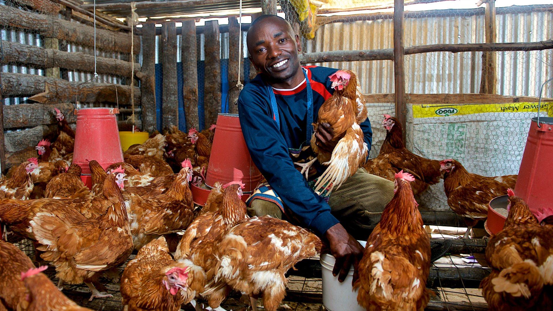 icow global elea-farmer-chicken
