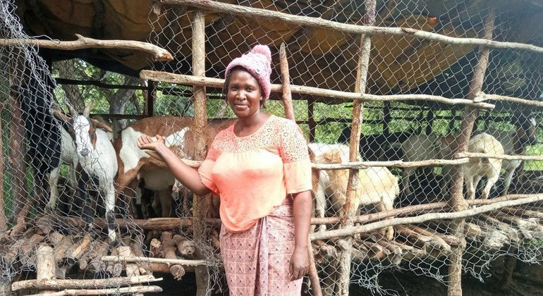 FROM THE FIELD: The goats helping Zambians to reach economic independence