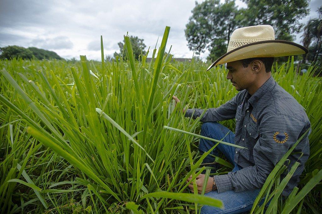 Agricultura sostenible en Goiás, en Brasil.