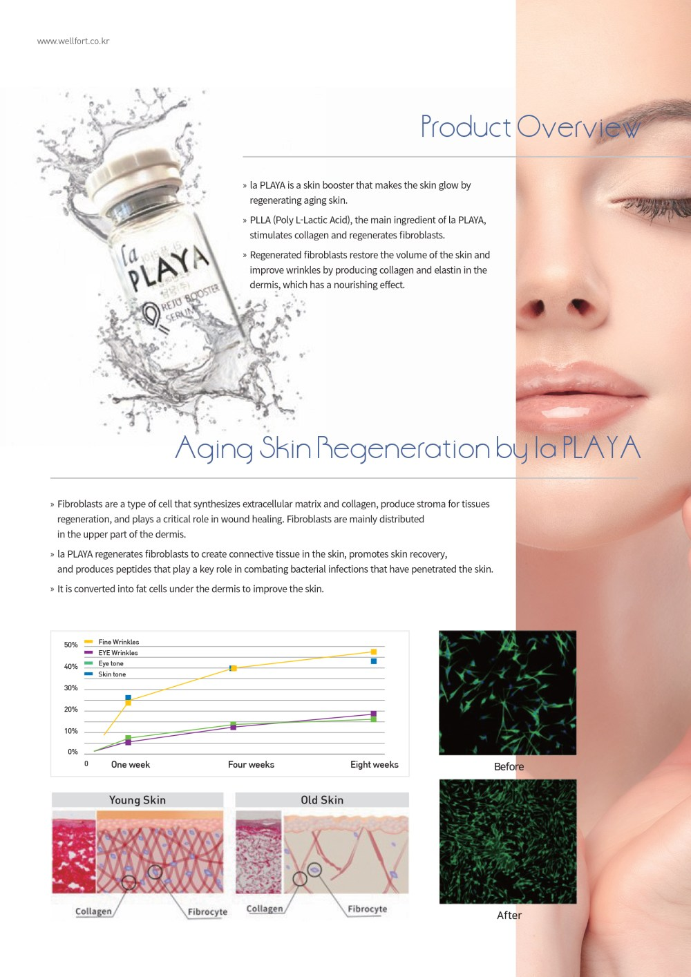 Product Overview la PLAYA is a skin booster that makes the skin glow by regenerating aging skin.  PLLA (Poly L-Lactic Acid), the main ingredient of la PLAYA, stimulates collagen and regenerates fibroblasts.  Regenerated fibroblasts restore the volume of the skin and improve wrinkles by producing collagen and elastin in the dermis, which has a nourishing effect. Aging Skin Regeneration by la PLAYA  Fibroblasts are a type of cell that synthesizes extracellular matrix and collagen, produce stroma for tissues regeneration, and plays a critical role in wound healing. Fibroblasts are mainly distributed  in the upper part of the dermis. Fibroblasts are a type of cell that synthesizes extracellular matrix and collagen, produce stroma for tissues regeneration, and plays a critical role in wound healing. Fibroblasts are mainly distributed  in the upper part of the dermis. It is converted into fat cells under the dermis to improve the skin.