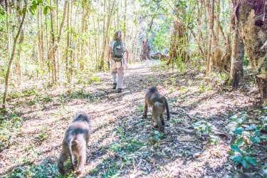 Baboon Forest School