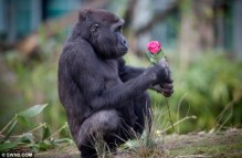 Apes Appreciate Beauty