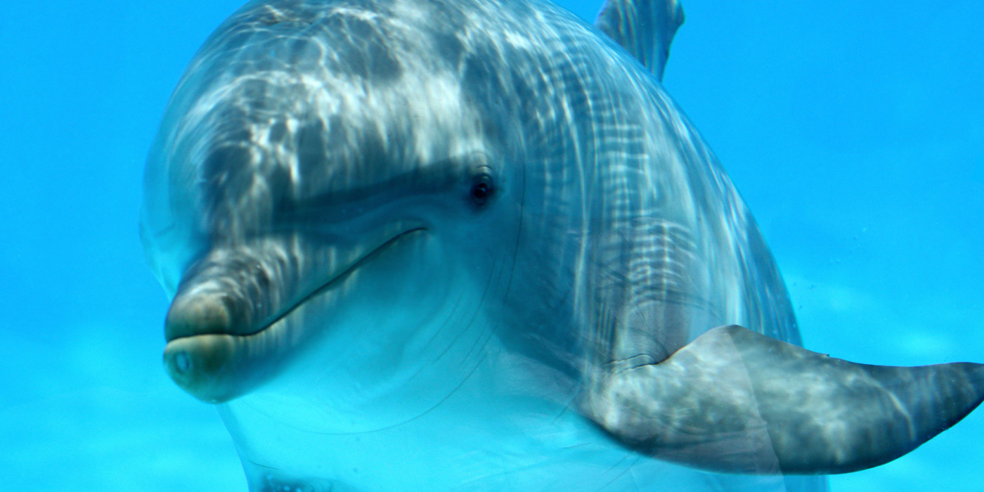 could we speak the language of dolphins