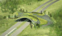 Wildlife Bridges
