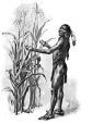 "Tisquantum (""Squanto"") - Native American"