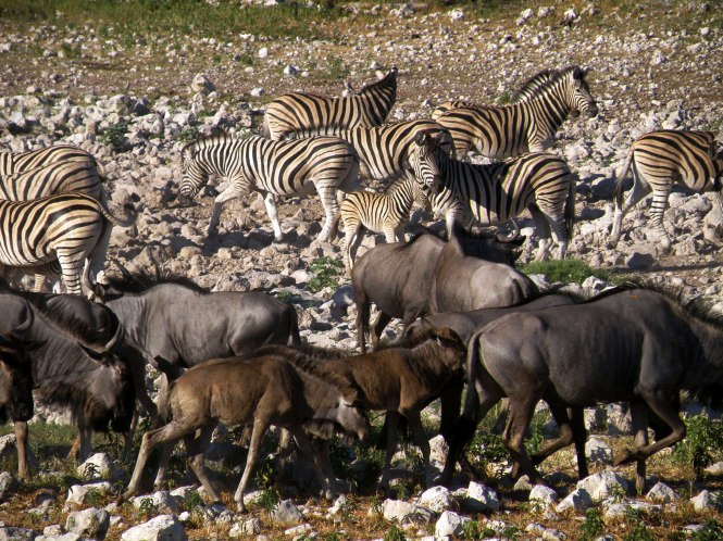 Busy watering hole in Namibia