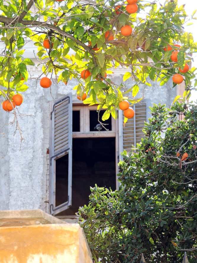 Window and oranges in downtown Athens