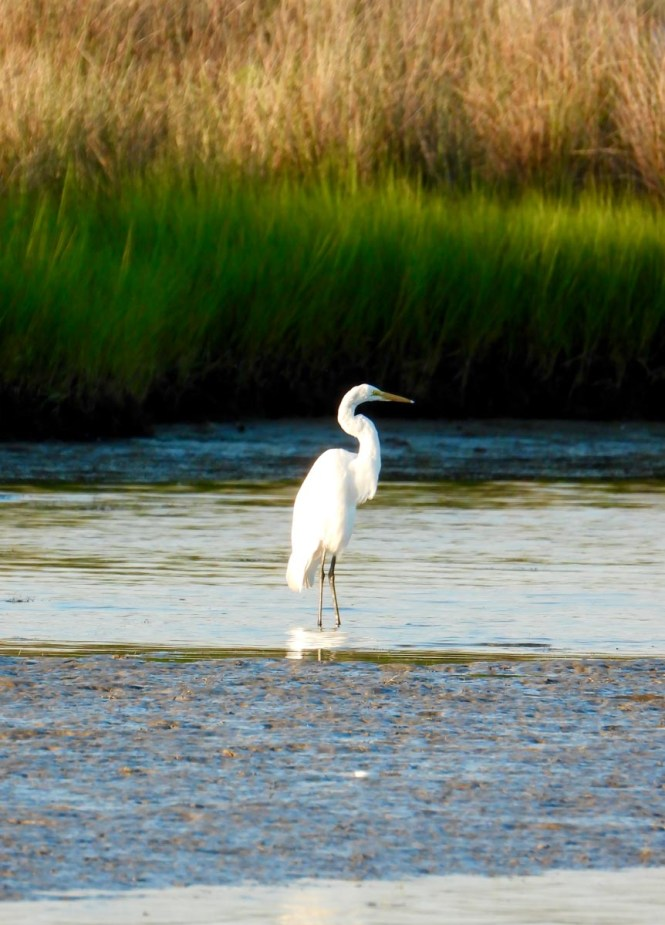 Smith Island bird