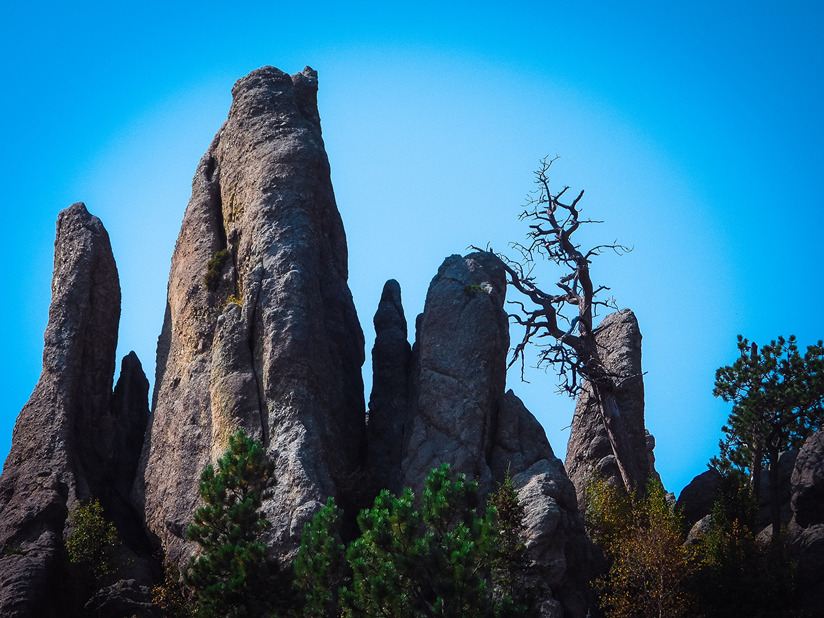 More Needles at Custer State Park