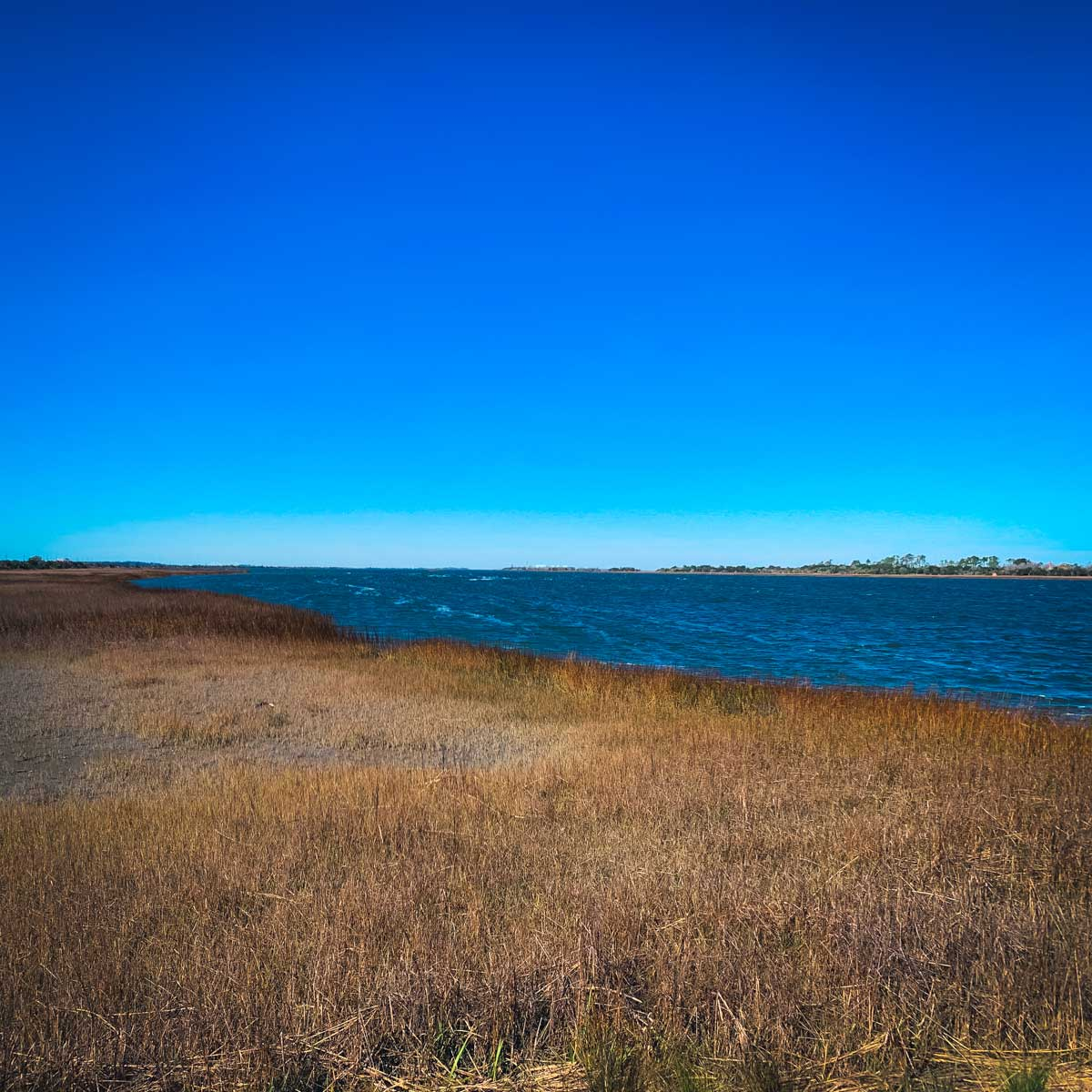 The marshland surrounding Fort Pulaski, one of the many cool things to do in Savannah, Georgia