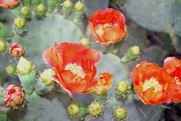Saguaro3-001
