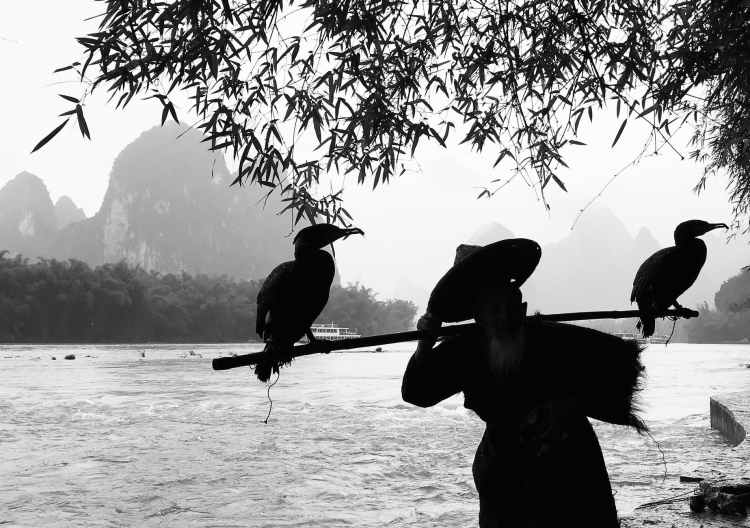 grayscale photography of person holding stick with two birds perching on it