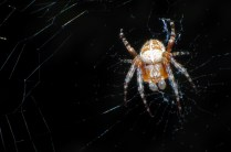 Spiders Universe
