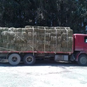 Actual load of hay for Ramba