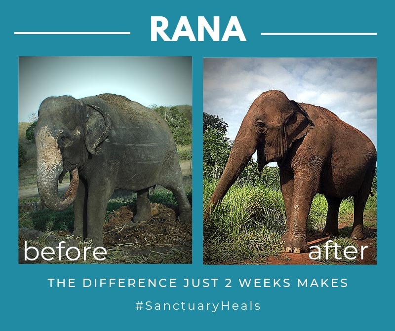 Rana Before and After