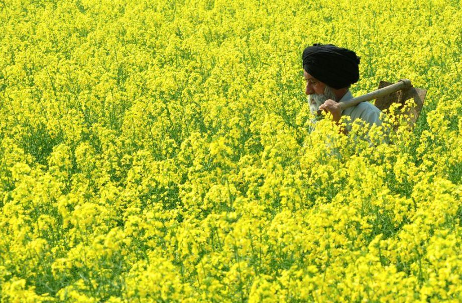 ГМ култури Подкрепа за устойчиво земеделие в Индия – Global ...