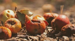 selective focus photography of dried fruits on field