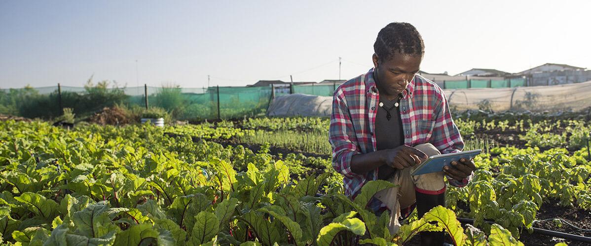 Agricultural Tech hub