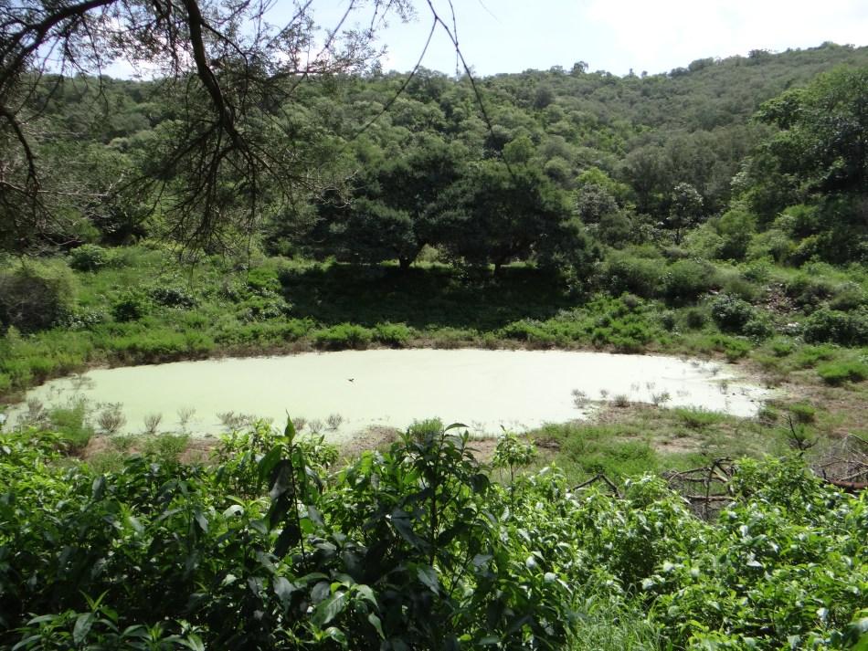 Rajasthan: Sariska Tiger Reserve Safari : A Detailed Guide - In Hindi