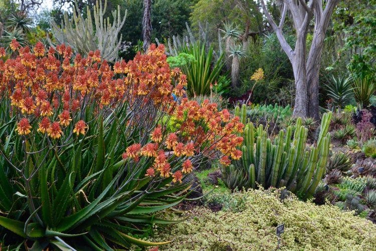The Huntington Botanical Gardens Beyond Beautiful The