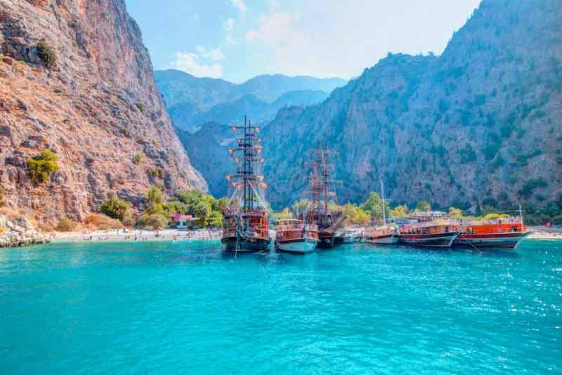 Image result for beautiful turkey