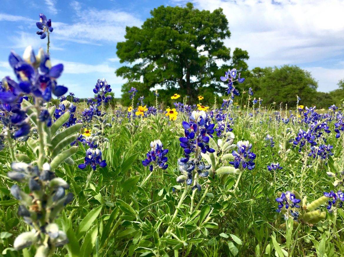 Culinary Tour through The Texas Hill Country and the Greater San Marcos Region