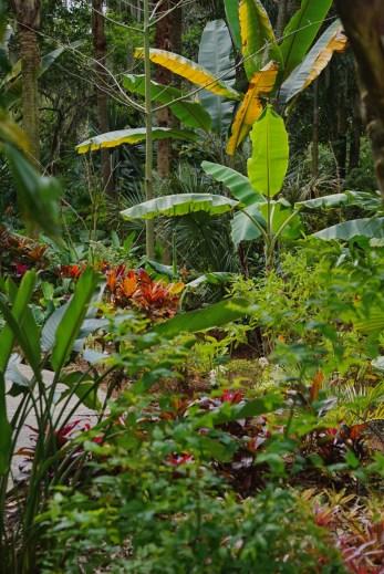 Leu Gardens Tropical
