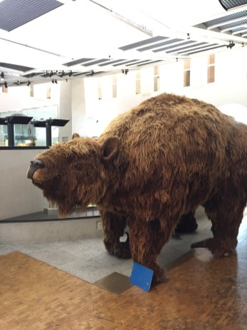 University of Zurich Zoological Museum Meggie
