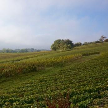 Champage Vineyards