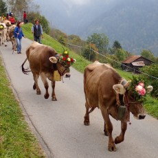 Alpine Descent Cow Parade