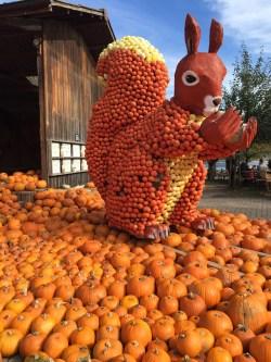 Jucker Farm_ pumpkin squirrel 2017