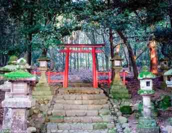 The Friday Photo Project | Nara Park, Japan