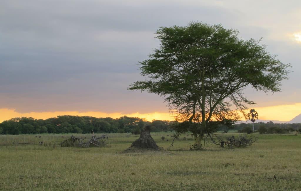 Volunteering in Malawi
