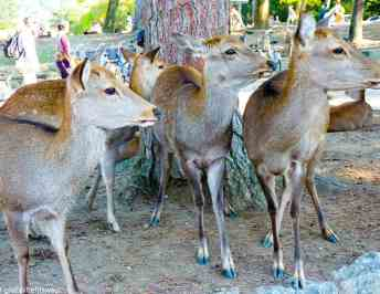 Things to do in Nara, Japan: See the best sites in Nara