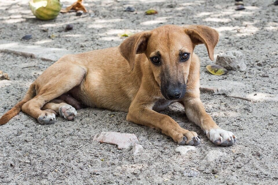 Places To Volunteer With Animals Abroad