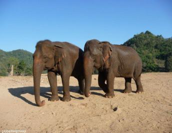Elephant Nature Park : The best place to volunteer with elephants in Thailand