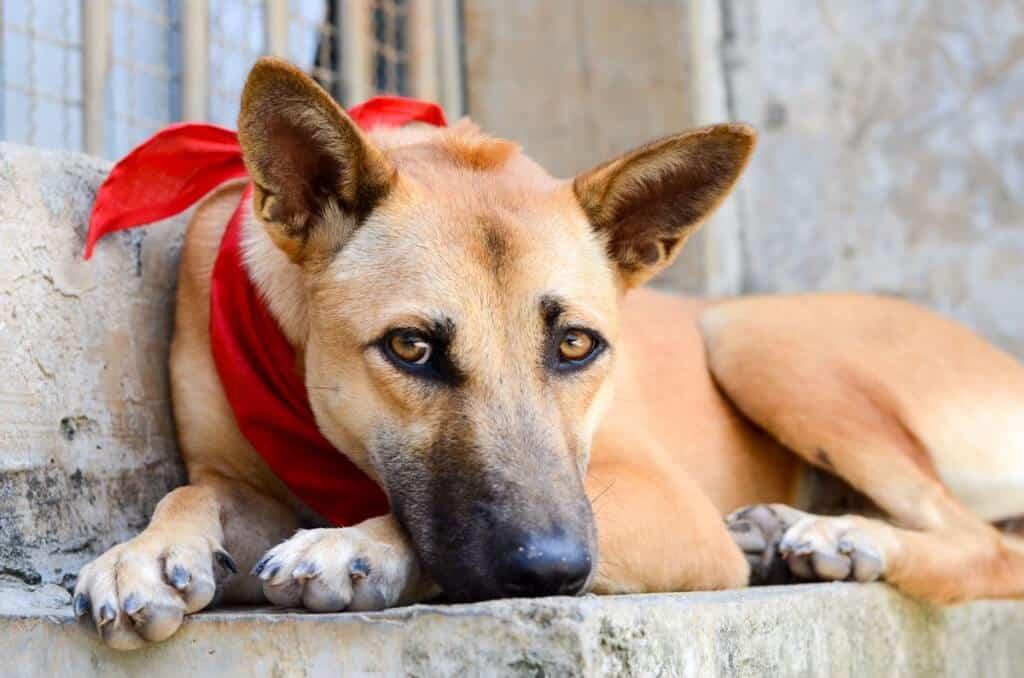 A dog at Lanta Animal Welfare