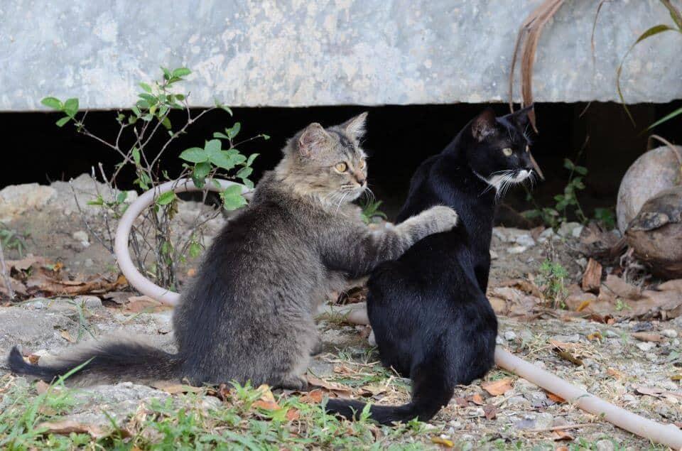 Happy cats at Lanta Animal Welfare
